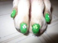 dog nail painting at K9 Resort and Spa
