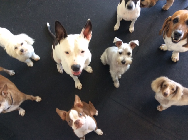 image of dogs in training